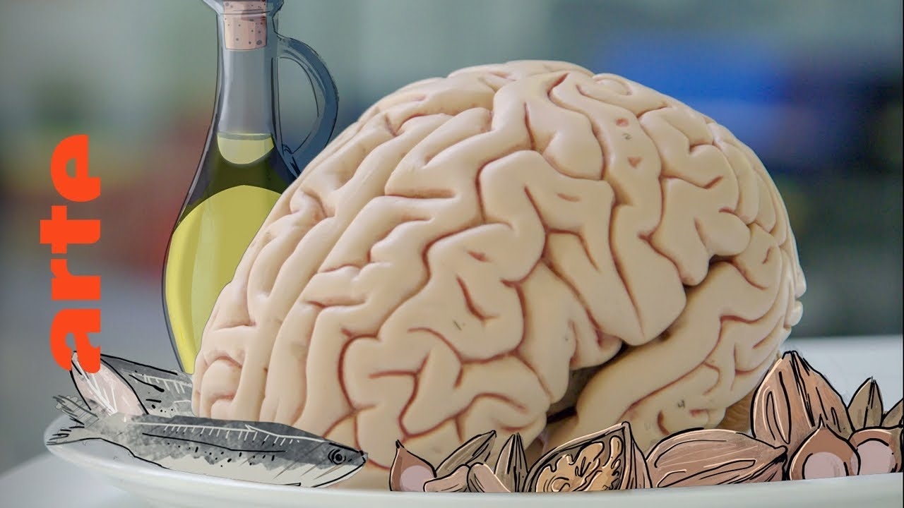 Our brain is what it eats