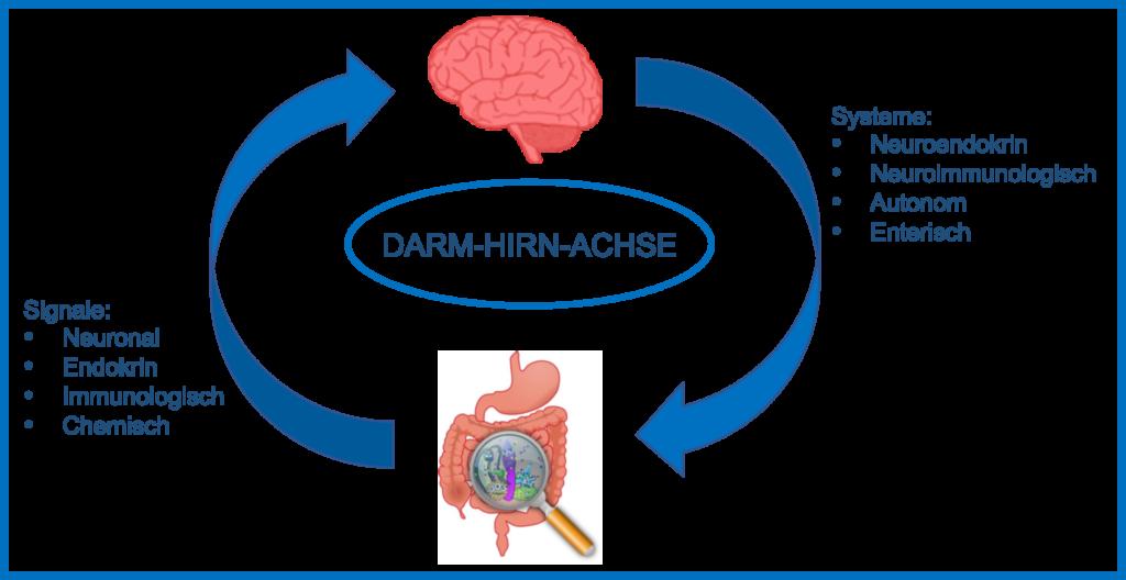Die Darm-Hirn-Achse – Signale und Systeme